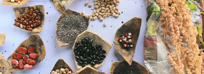 seeds, latin america, CERLAC